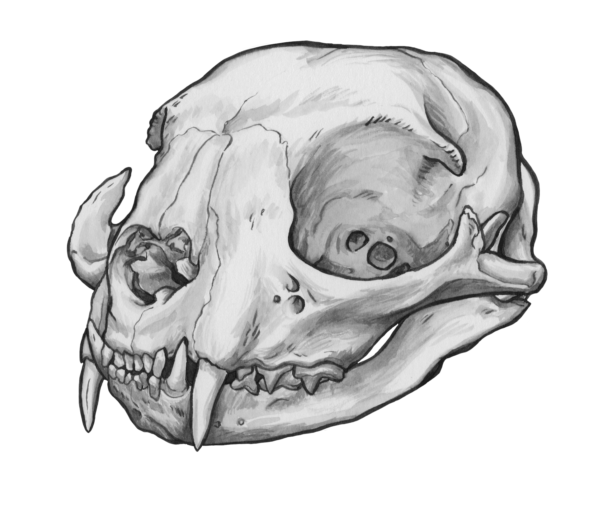 Cool Pen Drawings Animal Skulls