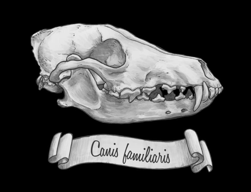 dog skull art print